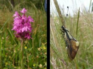 Orchidée pourpre et ascalaphe, photos prises par MREnvironnement